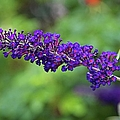 In The Butterfly Garden by Michiale Schneider