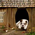 In The Dog House by Thanh Thuy Nguyen
