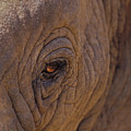 In The Eye Of The Elephant by Sandra Bronstein