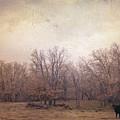 In The Field by Toni Hopper