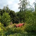 In The Garden by Attila Balazs