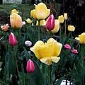 In The Garden by Judy  Waller