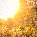 In The Garden Of Eden by Dan Sproul