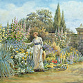 In The Garden by William Ashburner