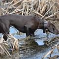In The Marsh by Tammy Mutka