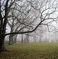 In The Mist by Alexandra Nielsen