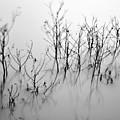 In The Mist by Jonathan Garrett