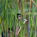 In The Reeds by Bill Wakeley