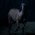 In The Shadows by Eleszabeth McNeel