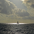 In The Spotlight. Sailboat Sailing In Naples Fl by Toby McGuire