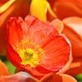In The Tulip Garden by Maria Urso