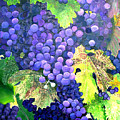 In The Vineyard by Diana Davenport