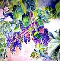 In The Vineyards by Sandy Ryan