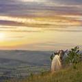 In The Warm Evening Sunlight  by Angel Ciesniarska