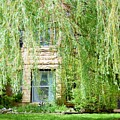In The Weeping Willows by Pamela Pursel