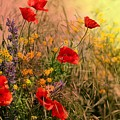 In The Wild - Poppies by Joy of Life Arts Gallery