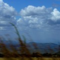 In The Wind by Carole Guillen
