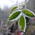 In The Winter Sunlight by Susan Baker