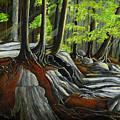 In The Woods by Brigitte  Meskey