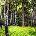 In The Woods by Veikko Suikkanen