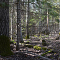 In The Woods by Wanda Nuttall