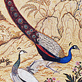 India: Peafowl, C1610 by Granger