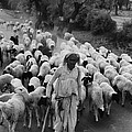India: Shepherd, 1966 by Granger