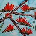 Indian Coral Tree by Dattatreya Phadke