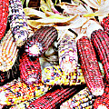 Indian Corn by Don Baker