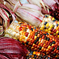 Indian Corn by Marilyn Hunt