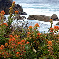 Indian Paintbrush At Point Lobos by Carla Parris