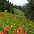 Indian Paintbrush Window Into The San Juans by Cascade Colors