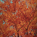 Indian Summer by Angela Doelling AD DESIGN Photo and PhotoArt
