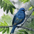 Indigo Bunting by Mary Tuomi