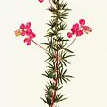 Indigo Plant by Granger