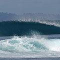 Indo  by Addison Fitzgerald