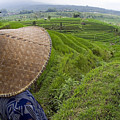 Indonesian Rice Farmer by Dave Fleetham - Printscapes