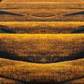 Industrial Prairie by Jeff Phillippi
