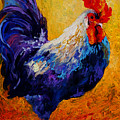 Indy - Rooster by Marion Rose