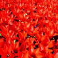 Infinite Crimson by David Dunham