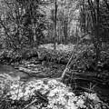 Infra Creek  by Mikael Jenei