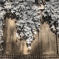 Infrared Botanical Sepia  by Jane Linders
