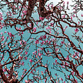Infrared Frangipani Tree by Stelios Kleanthous