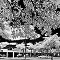 Infrared Indian River State College Hendry Campus #5 by Bill Piacesi