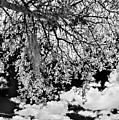Infrared Indian River State College Hendry Campus #8 by Bill Piacesi