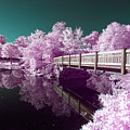 Infrared Reflections by Brian Hale