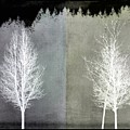 Infrared Trees With Texture by Patricia Strand