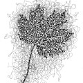 Ink Drawing Of Maple Leaf by Karla Beatty