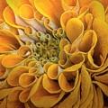 Inner Beauty by Mary Lou Chmura