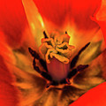 Inner Floral Macro Abstract by Julie Palencia